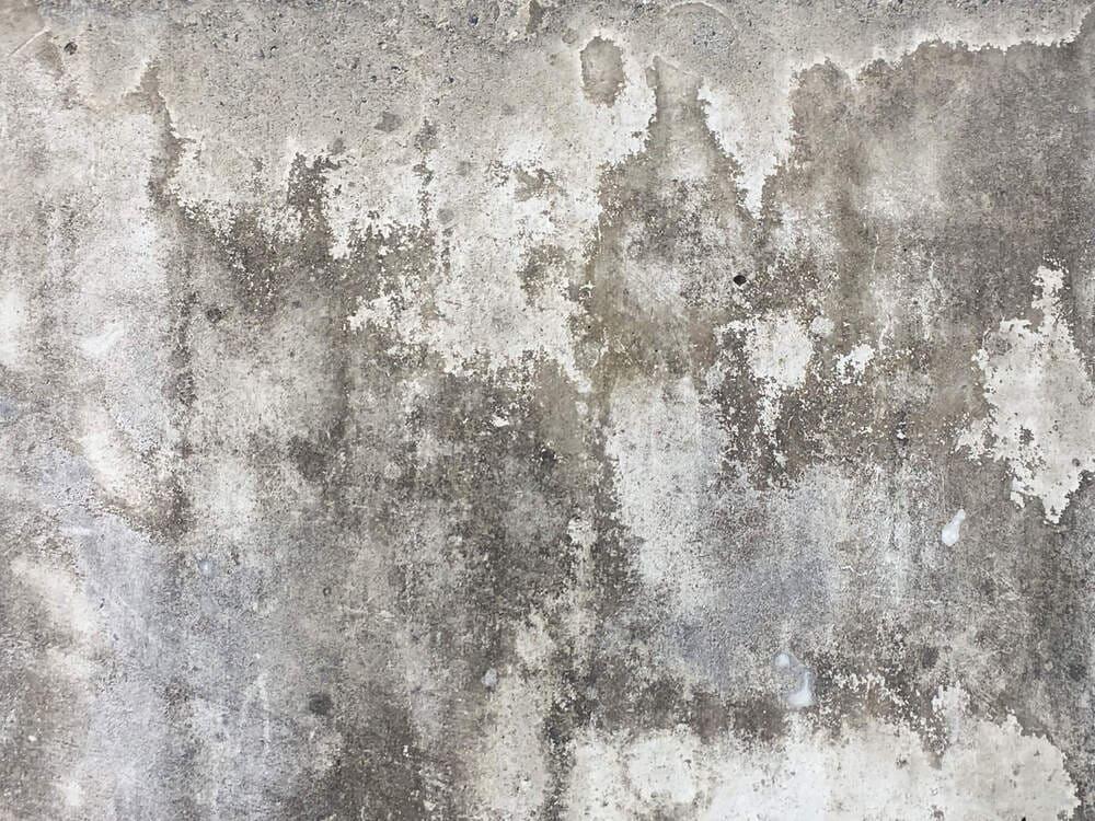 manchas de mofo